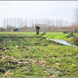 Snoeken in Brabant